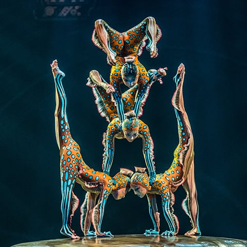 The Contortion act from the show KURIOS